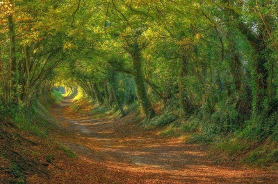 Sussex-20-Magical-Tree-Tunnels-You-Should-Definitely-Take-A-Walk-Through.jpg