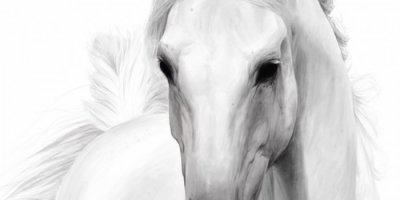 Horses-white-by-Paul-Pederson-700x350.jpg